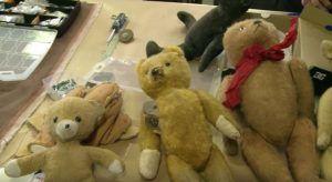 el oso de tddy